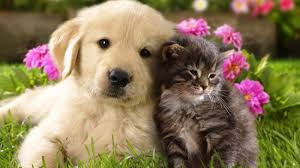 dogs and cats wallpaper. Delighful Wallpaper Download Free Cat And Dog Wallpaper For Mac High Quality HD In 2K  4K 5K For Dogs And Cats O