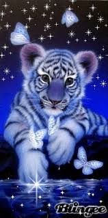 baby white tigers drawing. Brilliant White White Tiger Fantasy For Baby Tigers Drawing T