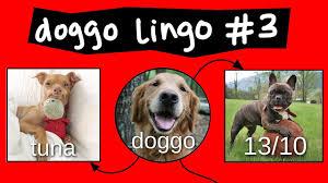Doggo Chart Part 3
