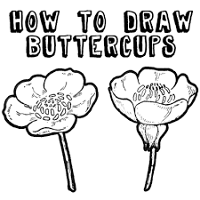 Small Picture How to Draw Flowers Drawing Buttercups Step by Step Lesson How