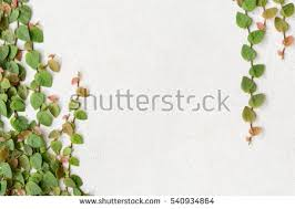 Types Of Fragrant Climbing Plants  HGTVClimbing Plant