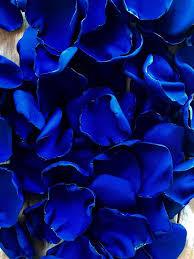 Royal blue wallpaper, Blue roses ...