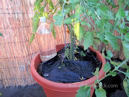 diy soda bottle drip irrigation