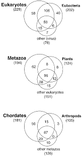 Who Invented The Venn Diagram Venn Diagrams Showing The Number Of Folds In Each Group Of
