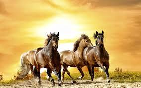 beautiful horses running wallpaper. Beautiful Horses Running Wallpaper Google Search In