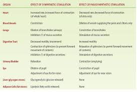 Are The Effects Of The Parasympathetic And The Sympathetic