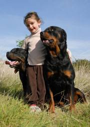 rottweiler dog mean. now does all the above mean that rottweilers are never dangerous? could anyone add a rottie to their family and worry about (or anything) rottweiler dog b
