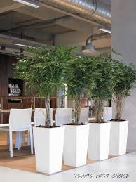 office plant displays. GORGEOUS Stylish Living OFFICE PLANTS \u2013 Can Be Rented With Full Maintenance Or Purchased. Office Plant Displays L