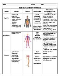 Body Systems Chart Human Body System Chart