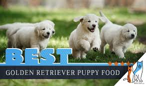 9 Best Golden Retriever Puppy Foods With Our 2019 Feeding Guide