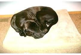 martha stewart dog beds dog bed jeep dog bed pet bed review martha stewart dog bed martha stewart dog beds