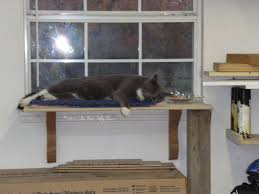 best cat perch for your lovely cat diy cat perch for window perch from wood