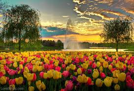Small Picture Beautiful Garden Of Tulips Pictures Photos and Images for