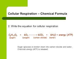 9 cellular respiration chemical formula