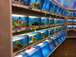 petsmart animals fish. Beautiful Petsmart She Doesnu0027t Care About Holding Any Animals  In Fact Prefers Not To We  Spent A Lot Of Time Looking At The Fish To Petsmart Animals Fish