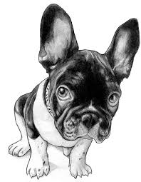 cute french bulldog clipart. Delighful French French Bulldog Draw  Buscar Con Google French Bulldog Cartoon  Drawing Cute And Clipart U