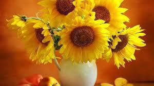 desktop wallpaper flowers high resolution. Unique High Yellow Flowers Desktop Wallpaper Intended High Resolution P