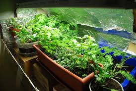 Indoor Kitchen Gardens Garden Developing Indoor Vegetable Garden As A Smart Part Of