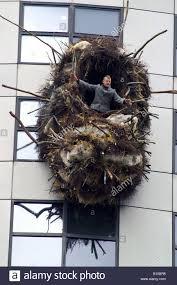 Huge Bird Nest Stock Photos \u0026 Huge Bird Nest Stock Images - Alamy