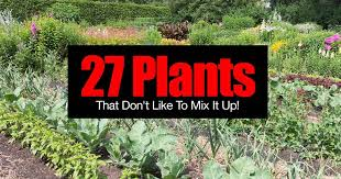 Kale Companion Planting Chart 27 Plants That Dont Like To Mix It Up Incompatible Plants