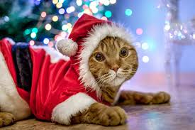 10 adorable <b>Christmas costumes</b> for Caturday