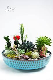 Small Picture Best 25 Mini cactus garden ideas on Pinterest Mini cactus