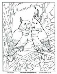 free jungle bird coloring pages for s atoo coloring printables enjoy coloring