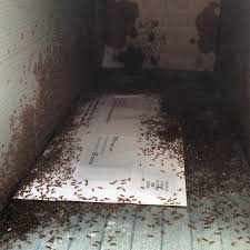 open residential mailboxes. I Opened My Mailbox To Find A Billion Wee Ants Open Residential Mailboxes O