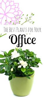 office plants no light. Perfect Office Low Light Indoor Plant Office Plants Desk   For Office Plants No Light O