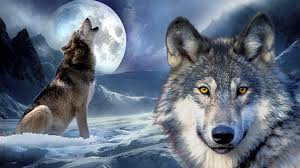 wolf howling at the moon wallpaper hd.  Wallpaper Wolf Moon Wallpaper Hd Wallpapers Animal Medicine Throughout Howling At The 3