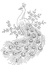 Peacock Coloring Pages To Print At Getdrawingscom Free For