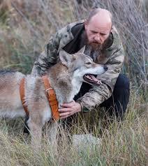 Gray wolf from Volgograd