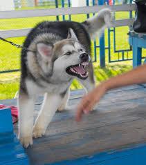 12 Year Us Dog Bite Fatality Chart Dog Bite Statistics According To Breed Adam S Kutner