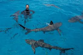 eli roth back as host of shark week s shark after dark on  eli roth back as host of shark week s shark after dark