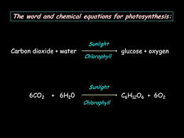 4 the word and chemical equations for photosynthesis carbon dioxide water glucose oxygen 6co 2 6h 2 0c 6 h 12 o 6 6o 2 sunlight chlorophyll