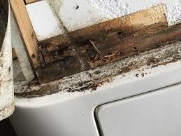 Reparatur Wasserschaden Hobby 540 Wohnwagen Und Wohnwagentechnik