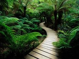 3d nature wallpapers jungle wallpapers ...