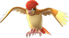 Image result for pidgeot