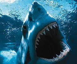 Documental tiburón blanco en el triángulo rojo