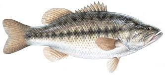 Texas Fish Chart Texas Statewide Daily Bag And Size Limits For Popular Fish