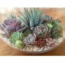 Small Picture Best 25 Succulent bowls ideas on Pinterest Suculent plants