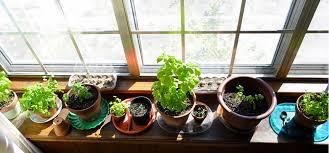 indoor gardening. Fine Gardening IndoorGardening To Indoor Gardening