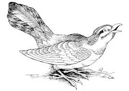 Index Of Coloriage Animaux Oiseau