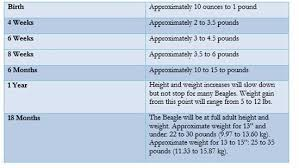 Puppies Weight And Height Page 2 Beagle Forum Our