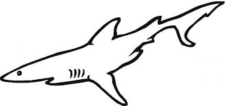 Small Picture hammerhead shark coloring page coloring pages shark free shark