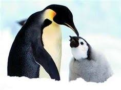 cute baby penguin wallpaper. Wonderful Baby Free Penguin Wallpapers And Other Nature Desktop Backgrounds Found 21  Wallpapers On 1 Pages Displayed Wallpaper To And Cute Baby Wallpaper P