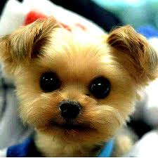 cute puppy pictures slideshow