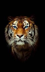 Wallpaper 4K Tiger Gallery
