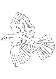 Small Picture Flying blackbird coloring page Download Free Flying blackbird