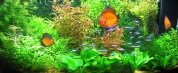 Image result for right aquarium can be mesmerizing to look into